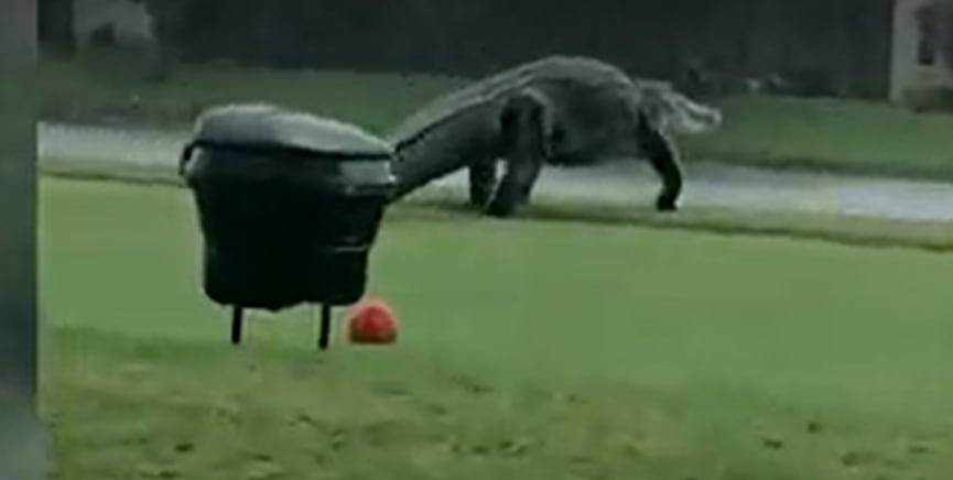 'They are out there': 'Gator Girl' Christy Kroboth on massive alligator spotted at Florida golf club